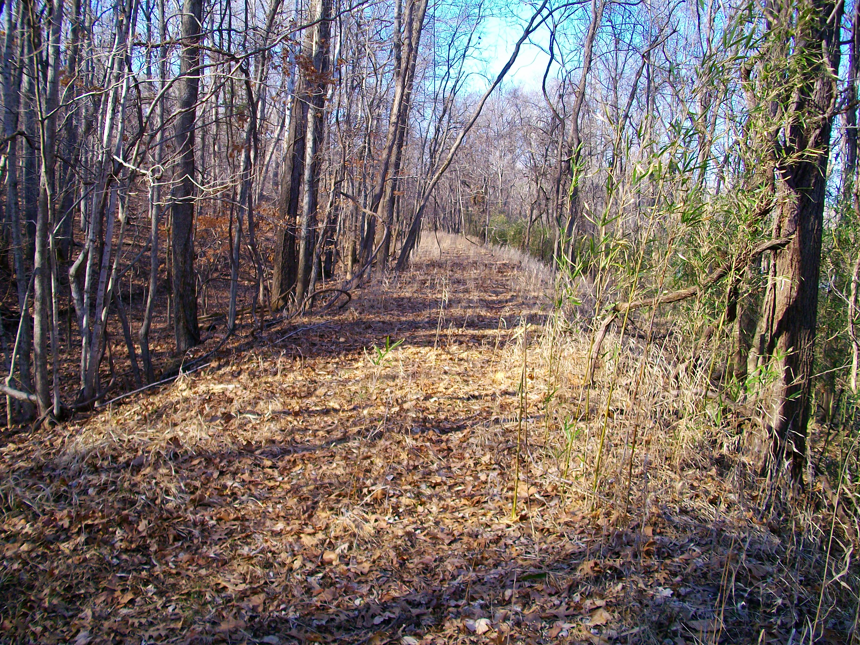 Right of way north of Big Spring.  This is the curve going to Chicopee approximately a mile north of here.  (looking northeast)